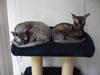 kitten bij volwassen kat