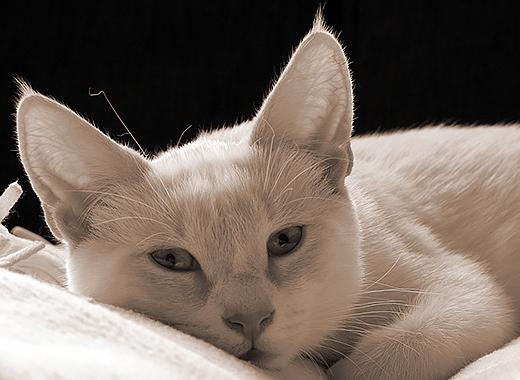 kat valt aan
