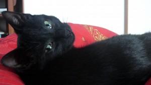 schuwe kat