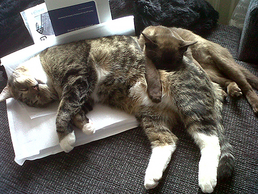 een tweede kat erbij