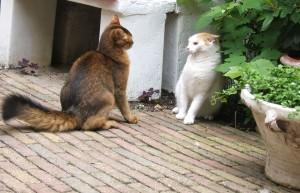 gedragsproblemen bij de kat