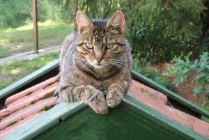wat maakt een kat gelukkig