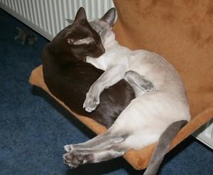 plotselinge ruzie tussen katten