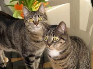 agressie naar andere kat