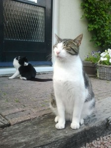 kattengedragstherapie