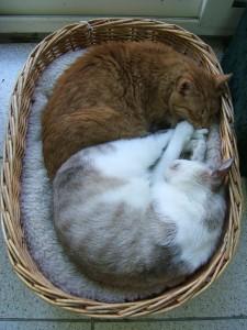 Zijn katten altijd vriendjes?