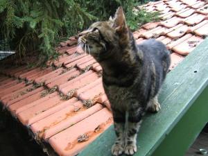 vermiste kat