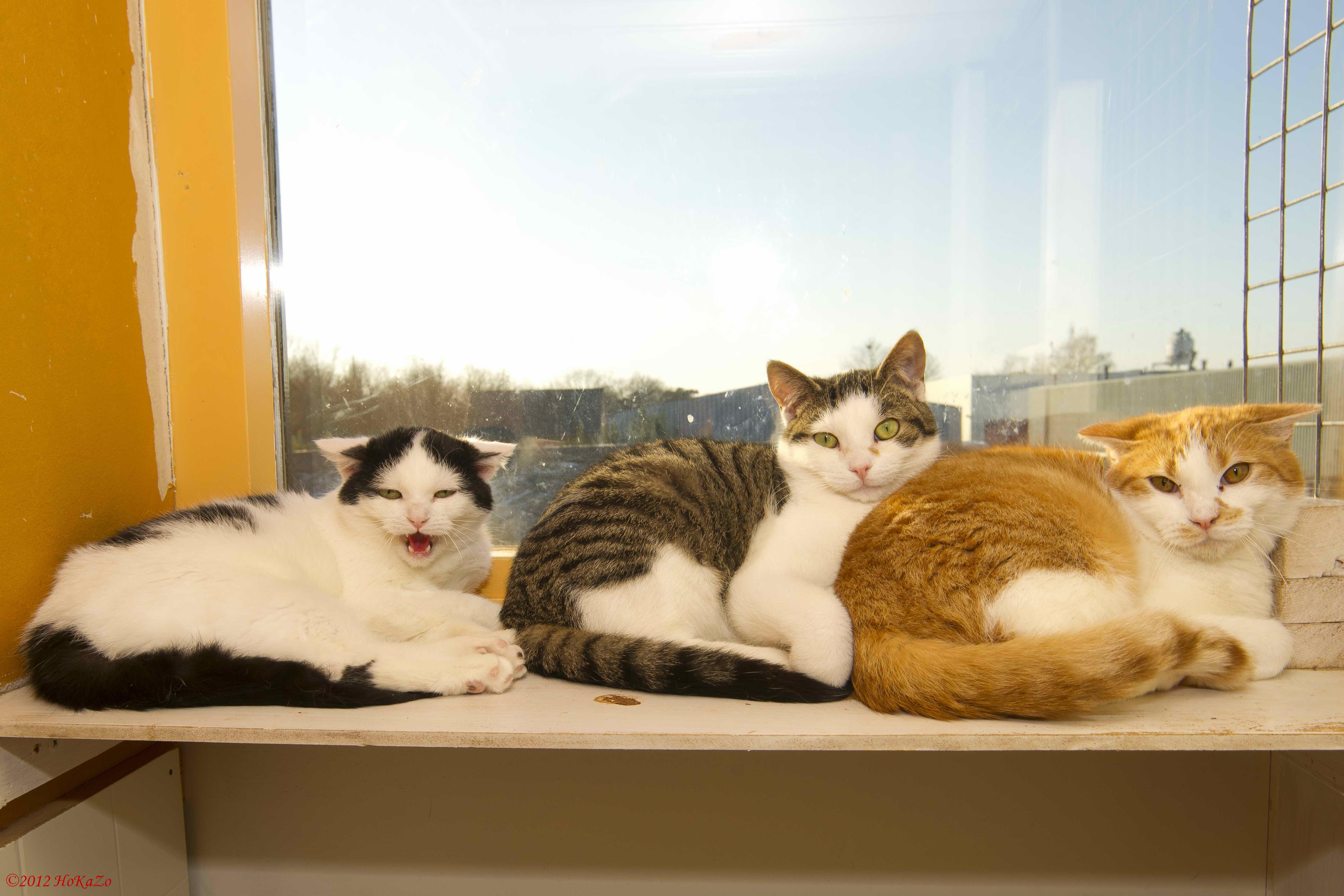 angst, stress en agressie bij katten