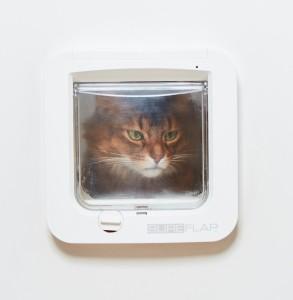 Frustratie bij katten