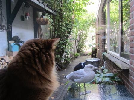 Horen katten buiten