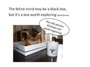 hoe denkt een kat
