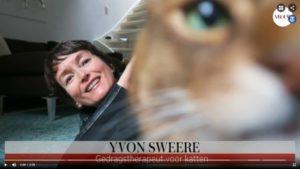 vloggen over kattengedragstherapie