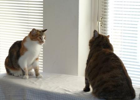 introductie van een nieuwe kat
