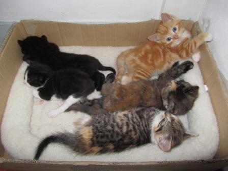 kittens scheiden van moeder
