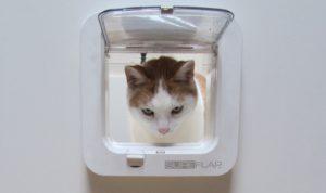 verveling bij katten