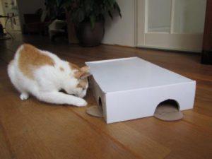 katten laten werken voor eten